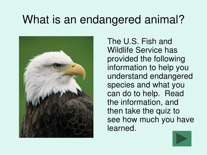 What is an endangered animal