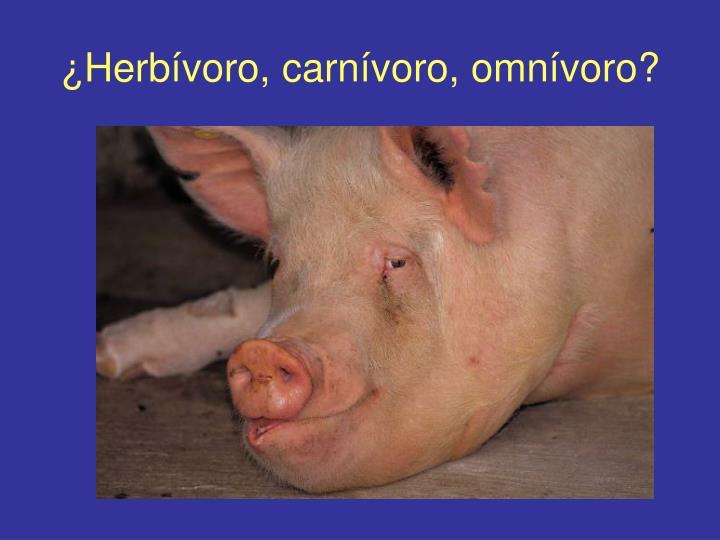¿Herbívoro, carnívoro, omnívoro?