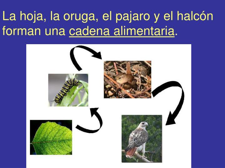 La hoja, la oruga, el pajaro y el halcón forman una