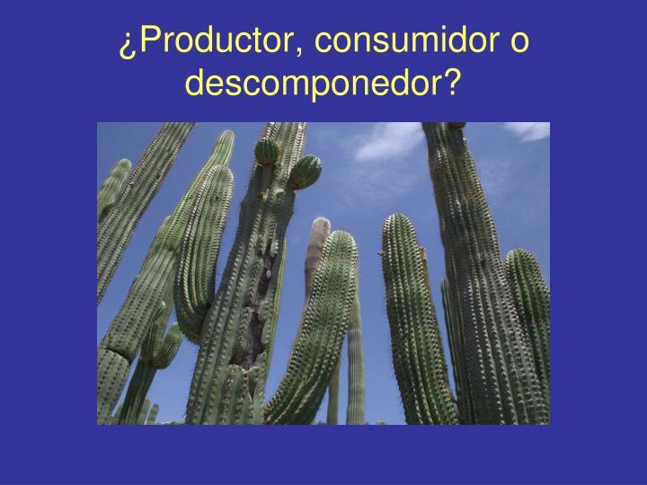 ¿Productor, consumidor o descomponedor?