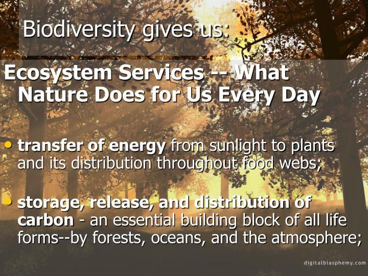 Biodiversity gives us: