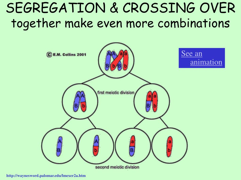 SEGREGATION & CROSSING OVER