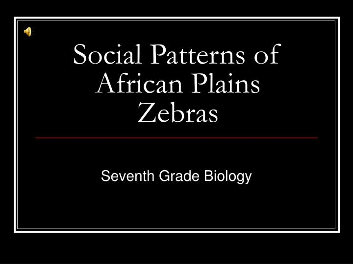 Social patterns of african plains zebras