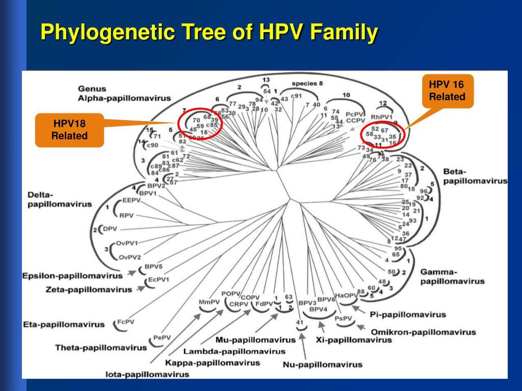 Phylogenetic Tree of HPV Family