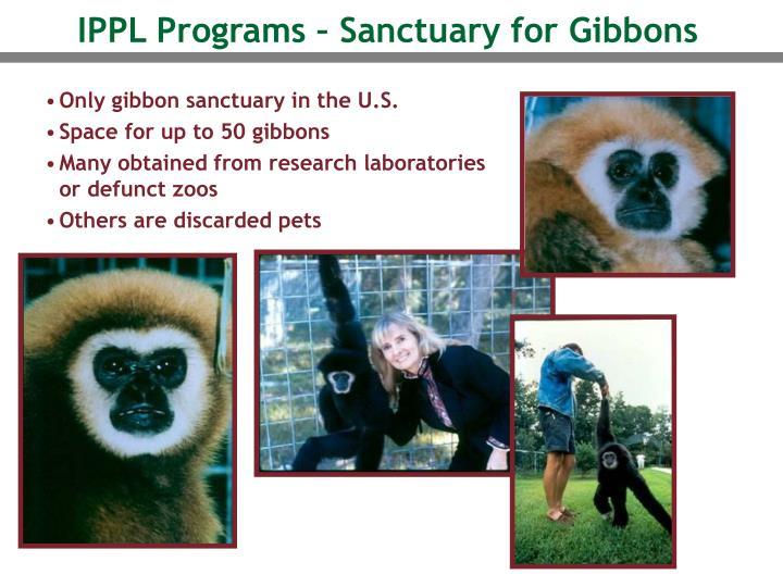 IPPL Programs – Sanctuary for Gibbons