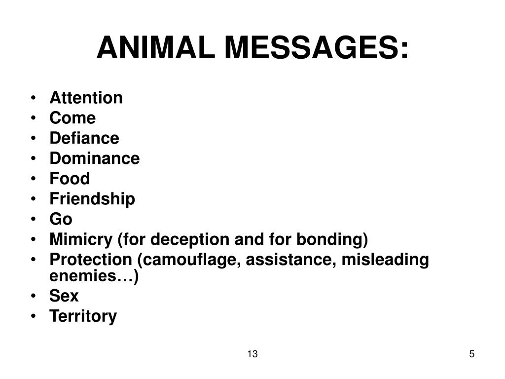 ANIMAL MESSAGES: