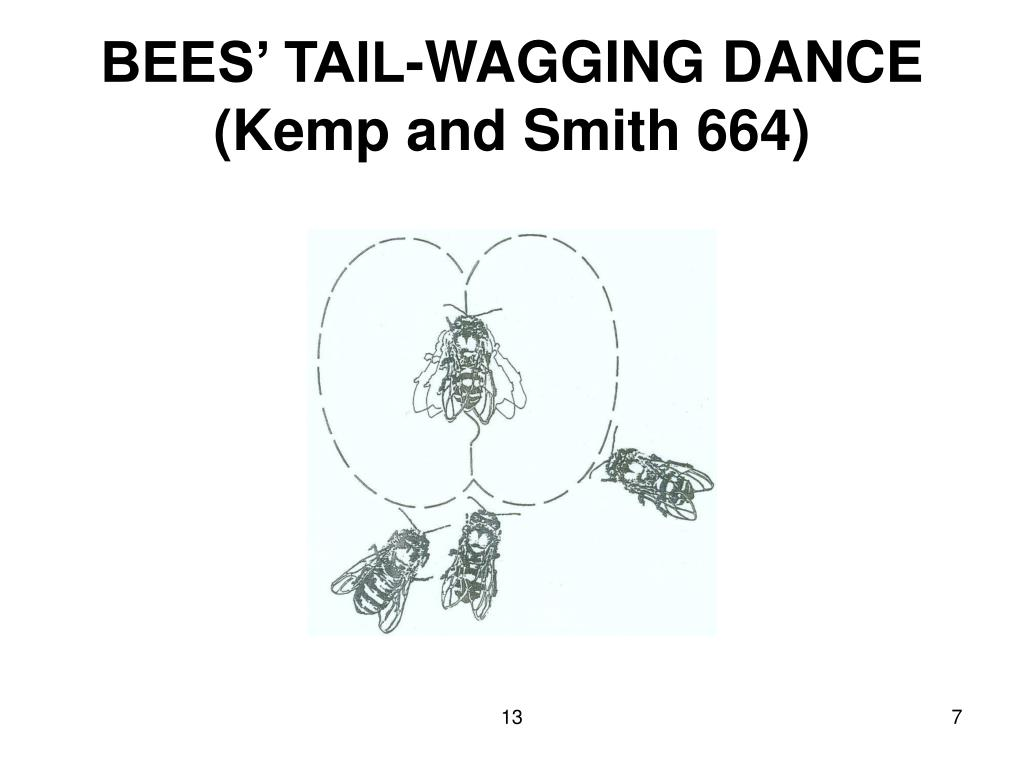 BEES' TAIL-WAGGING DANCE (Kemp and Smith 664)