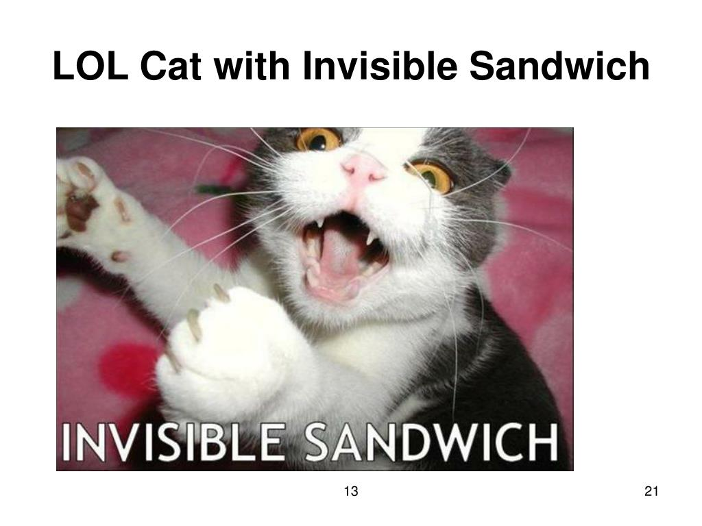 LOL Cat with Invisible Sandwich