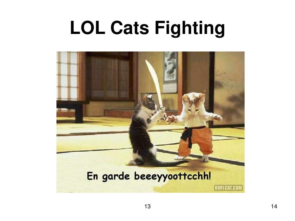 LOL Cats Fighting