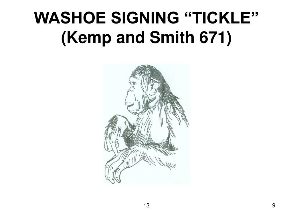 """WASHOE SIGNING """"TICKLE"""" (Kemp and Smith 671)"""