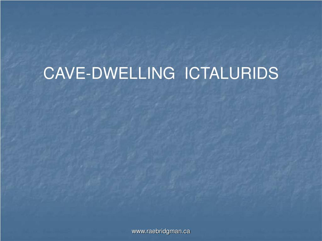 CAVE-DWELLING  ICTALURIDS