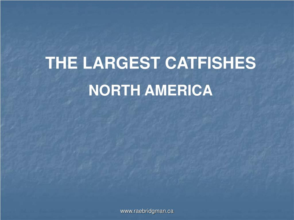 THE LARGEST CATFISHES