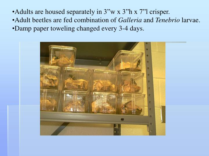 """Adults are housed separately in 3""""w x 3""""h x 7""""l crisper."""