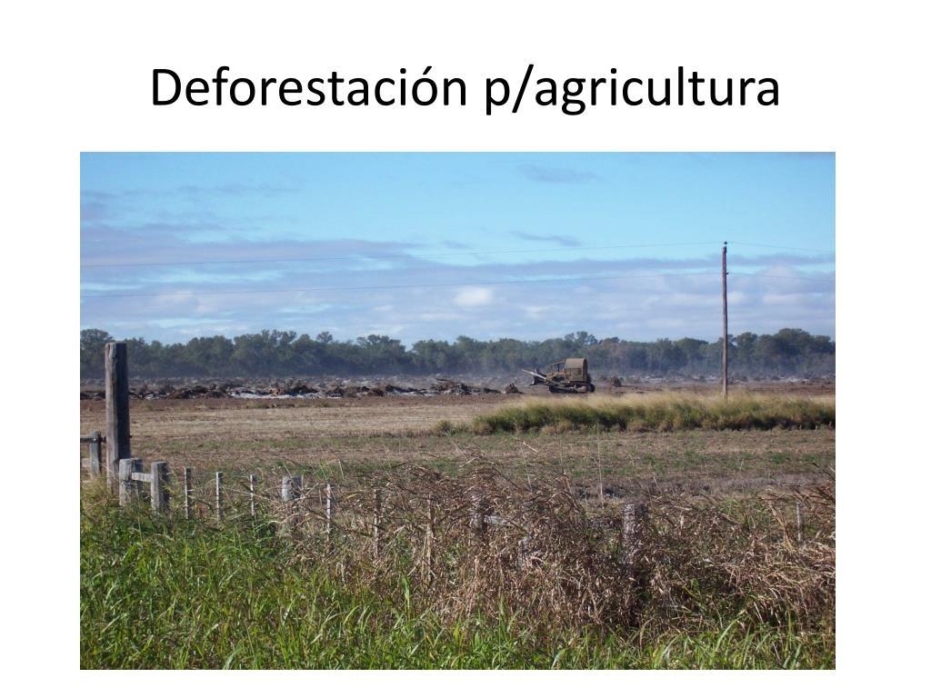 Deforestación p/agricultura