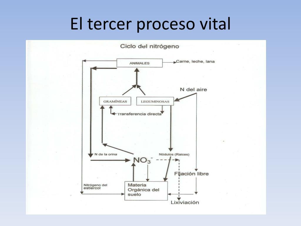 El tercer proceso vital
