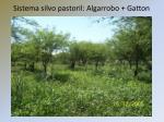 sistema silvo pastoril algarrobo gatton