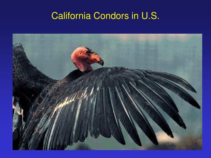 California Condors in U.S.