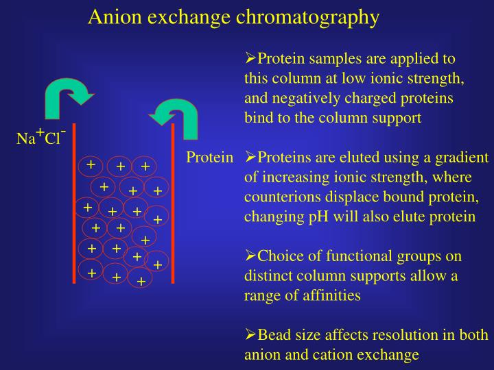 Anion exchange chromatography