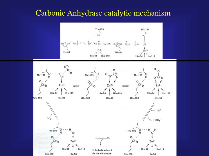 Carbonic Anhydrase catalytic mechanism