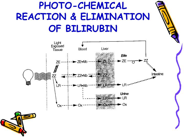 PHOTO-CHEMICAL REACTION & ELIMINATION OF BILIRUBIN