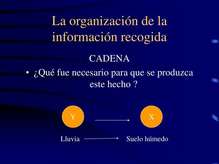 La organización de la información recogida