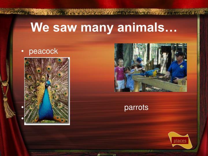 We saw many animals…