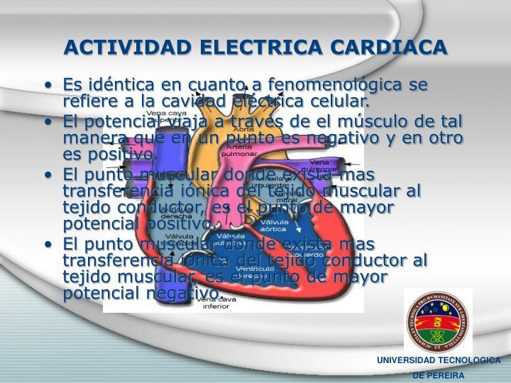 ACTIVIDAD ELECTRICA CARDIACA