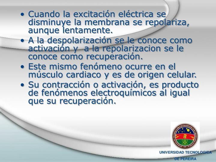 Cuando la excitación eléctrica se disminuye la membrana se repolariza, aunque lentamente.
