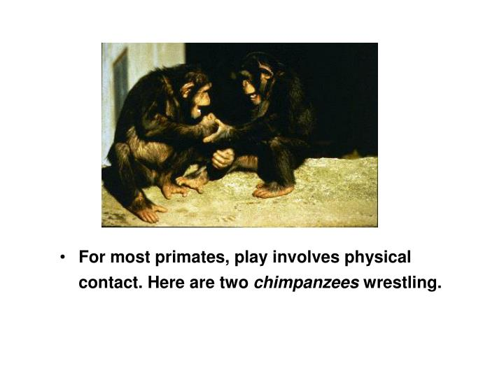 For most primates, play involves physical contact. Here are two