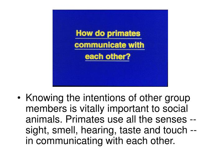 Knowing the intentions of other group members is vitally important to social animals. Primates use all the senses -- sight, smell, hearing, taste and touch -- in communicating with each other.