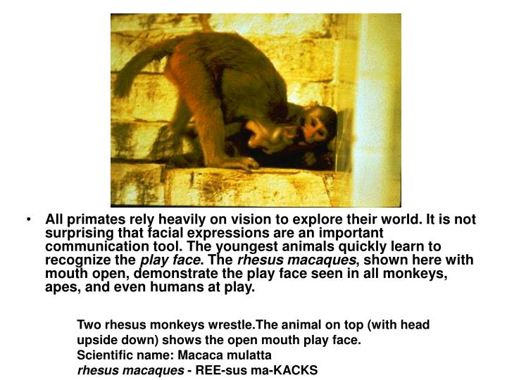 All primates rely heavily on vision to explore their world. It is not surprising that facial expressions are an important communication tool. The youngest animals quickly learn to recognize the
