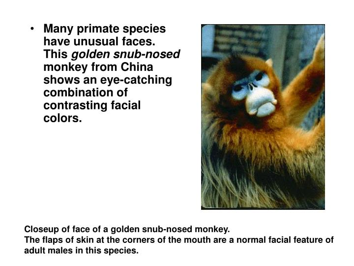 Many primate species have unusual faces. This