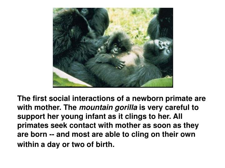 The first social interactions of a newborn primate are with mother. The