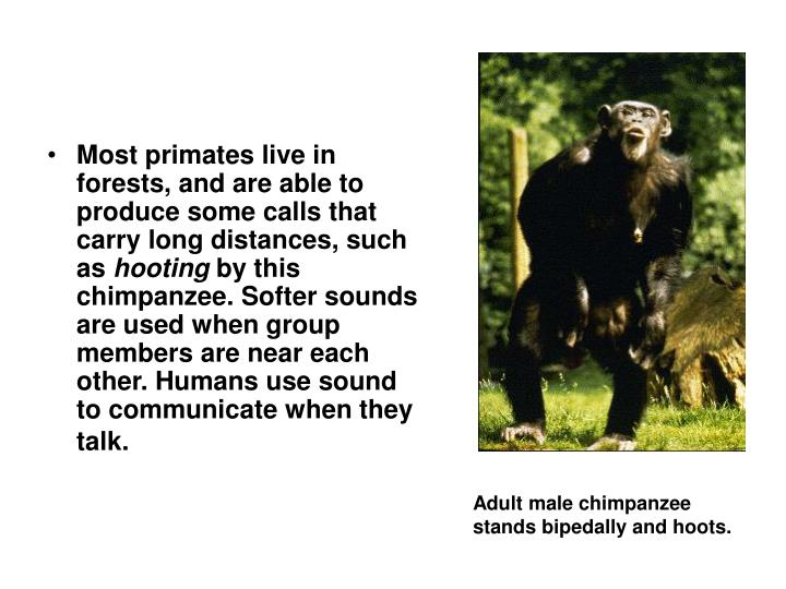 Most primates live in forests, and are able to produce some calls that carry long distances, such as