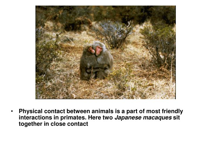 Physical contact between animals is a part of most friendly interactions in primates. Here two