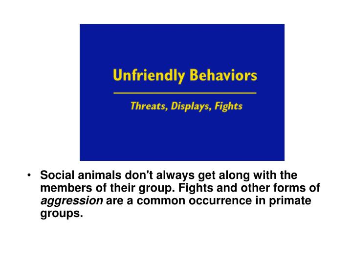 Social animals don't always get along with the members of their group. Fights and other forms of