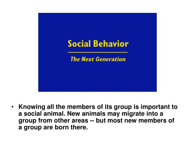 Knowing all the members of its group is important to a social animal. New animals may migrate into a group from other areas -- but most new members of a group are born there.