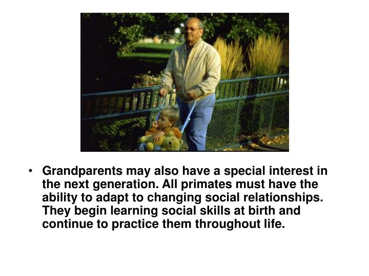 Grandparents may also have a special interest in the next generation. All primates must have the ability to adapt to changing social relationships. They begin learning social skills at birth and continue to practice them throughout life.