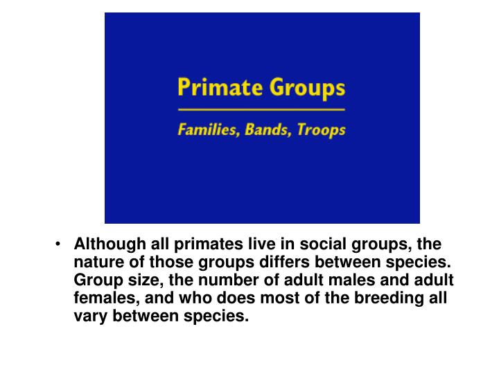 Although all primates live in social groups, the nature of those groups differs between species. Group size, the number of adult males and adult females, and who does most of the breeding all vary between species.