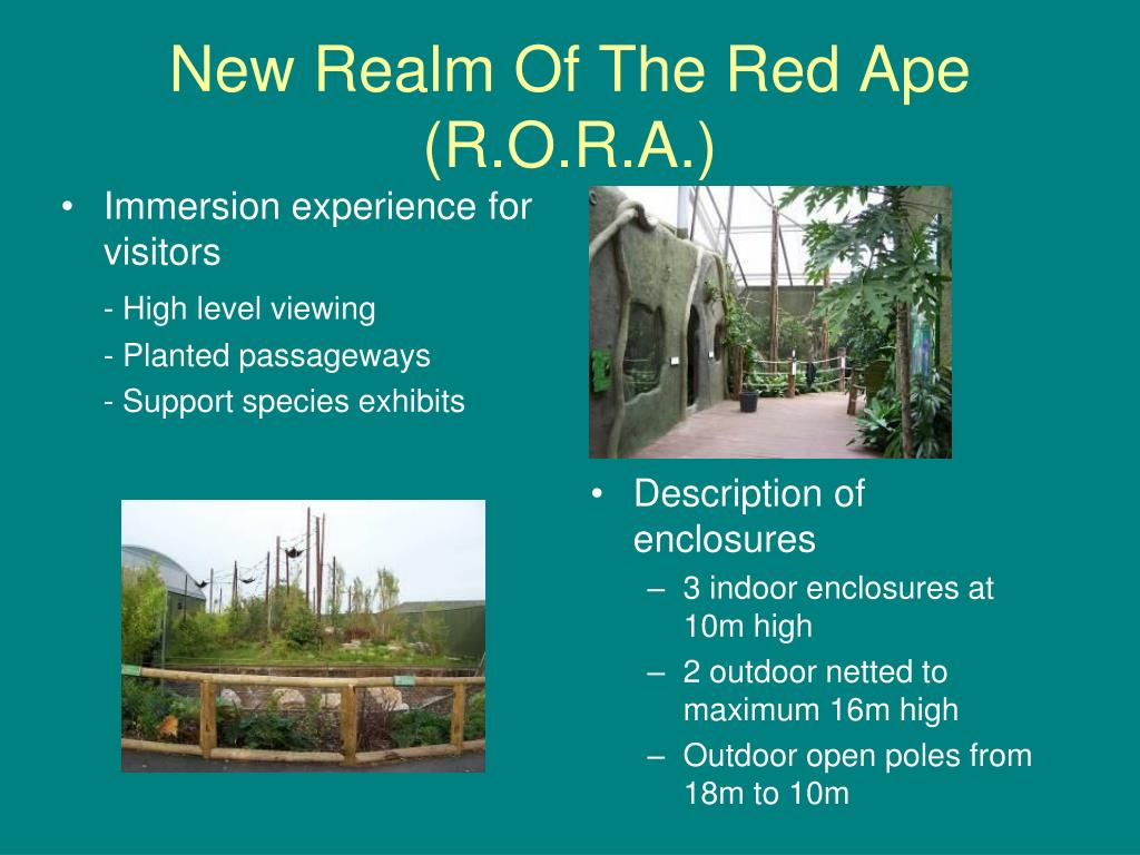 New Realm Of The Red Ape