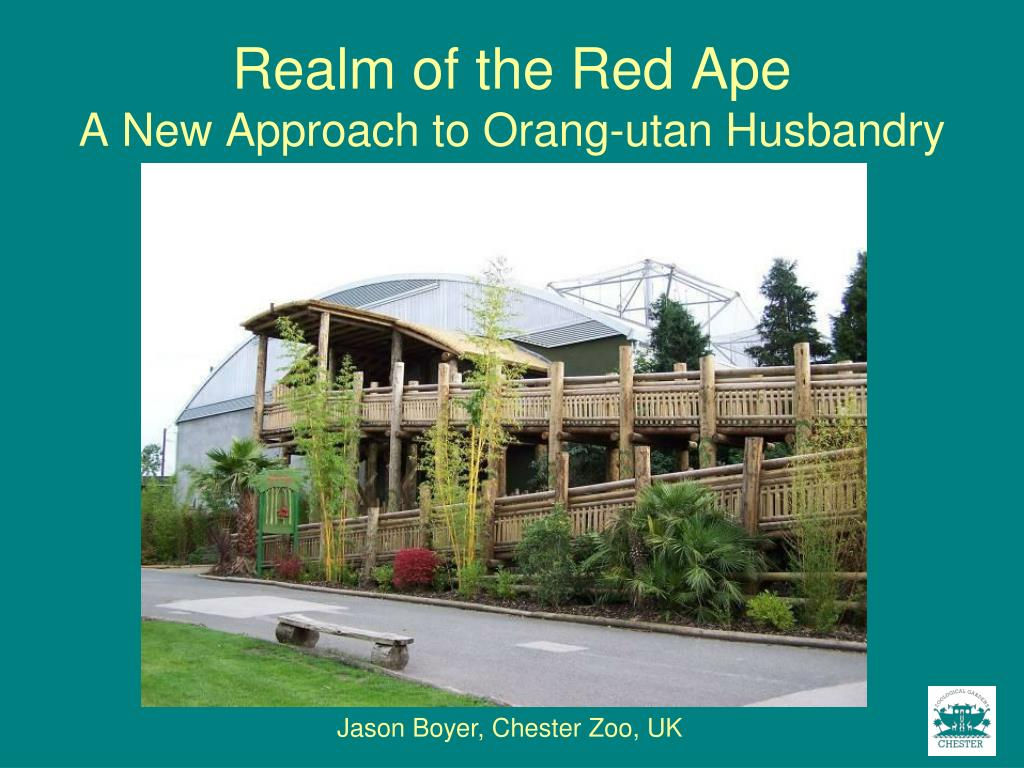 realm of the red ape a new approach to orang utan husbandry