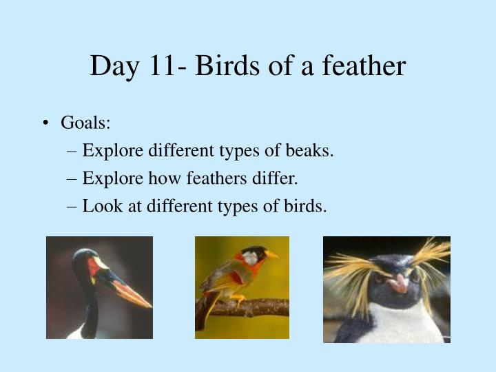 Day 11- Birds of a feather
