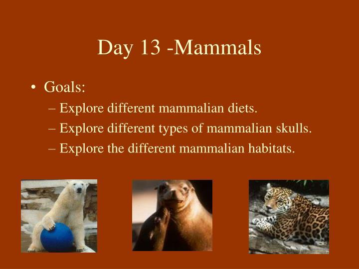 Day 13 -Mammals