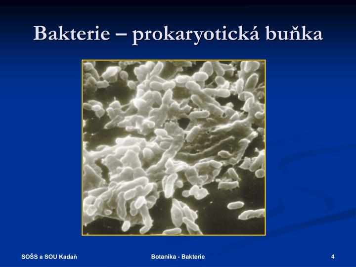 Bakterie – prokaryotická buňka