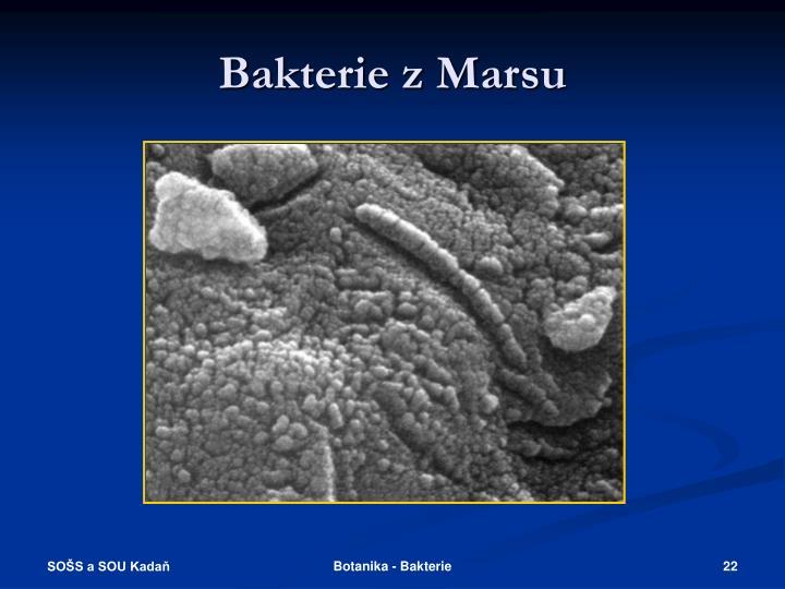 Bakterie z Marsu