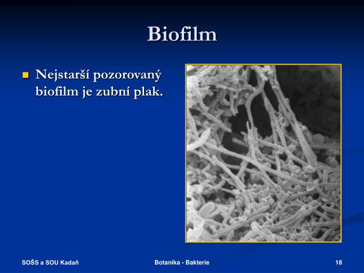 Nejstarší pozorovaný biofilm je zubní plak.