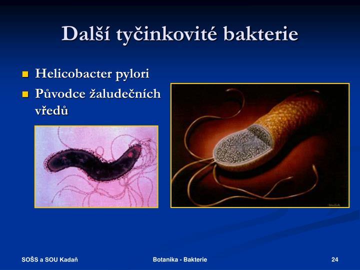 Další tyčinkovité bakterie