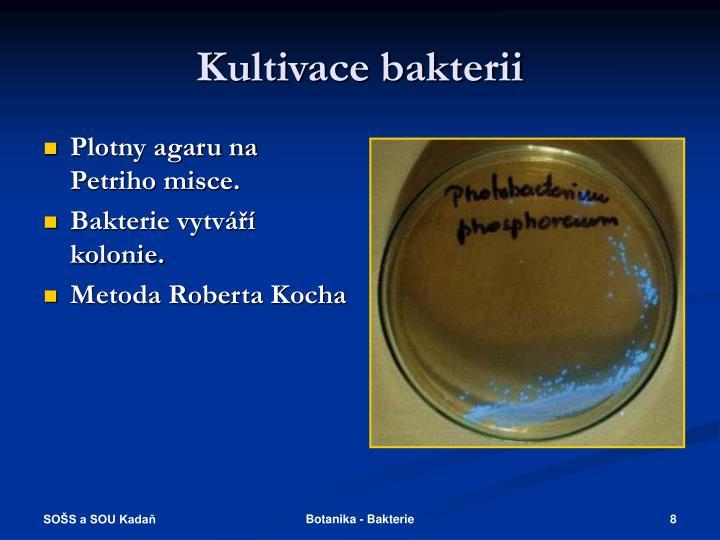 Kultivace bakterii
