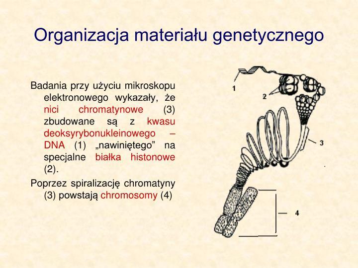 Organizacja materiau genetycznego