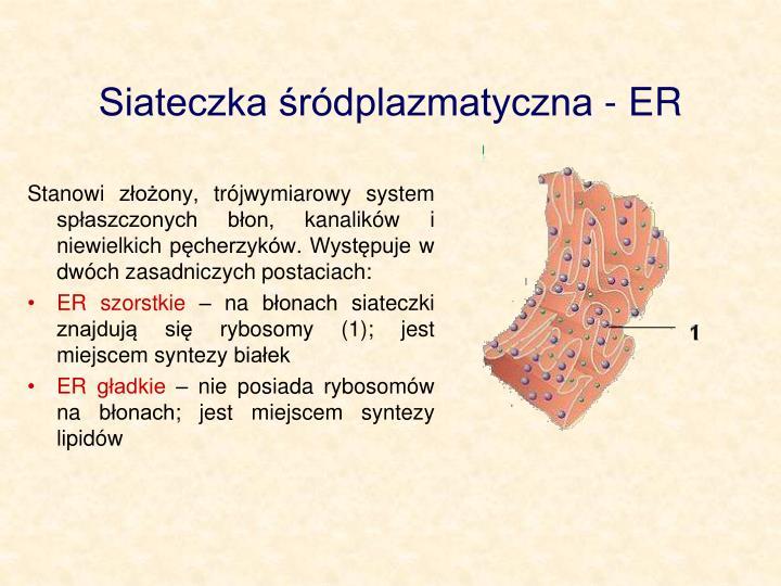 Siateczka rdplazmatyczna - ER